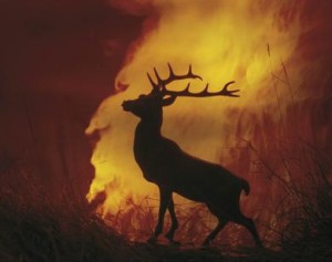 Hot Stag!